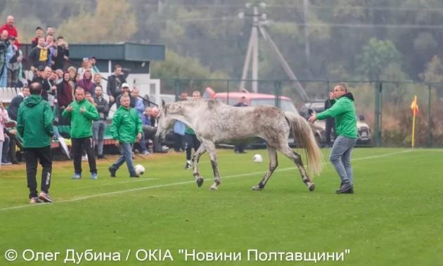 Собаки та кінь ледь не зірвали матч Україна – Італія
